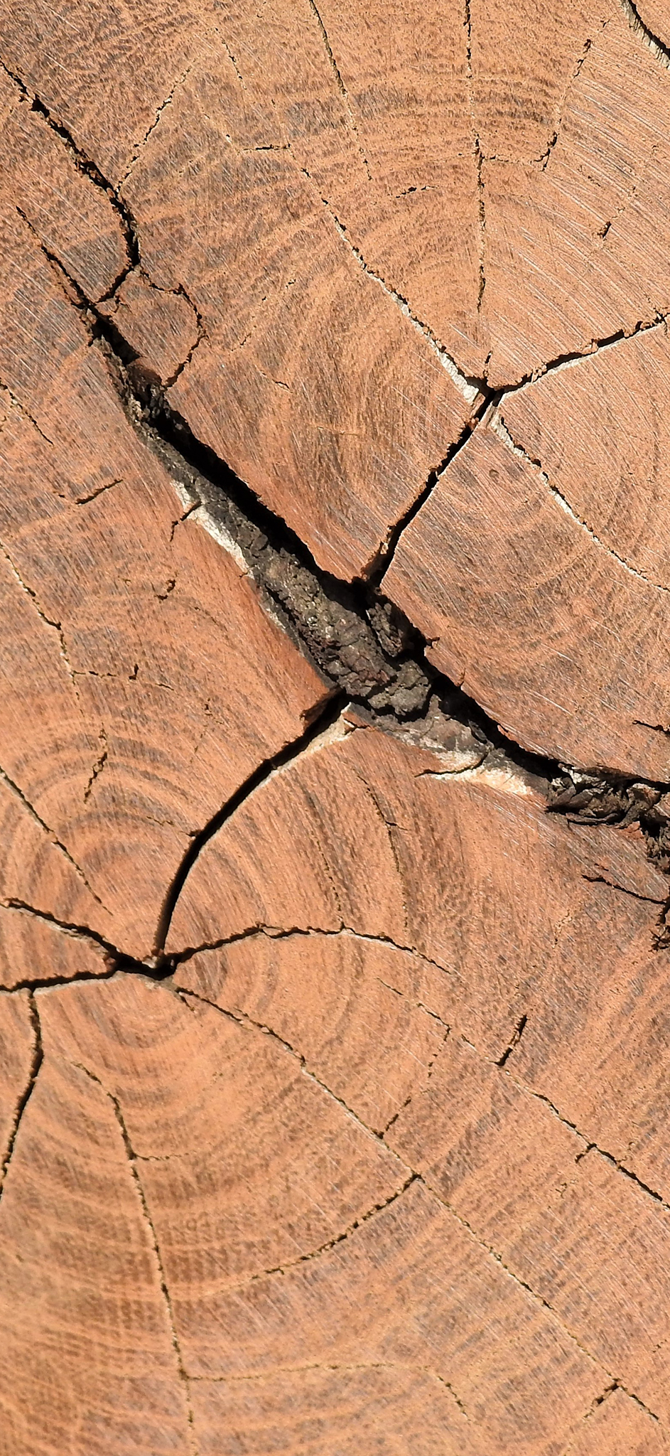 Tikoloshe-afrika-roots-wood